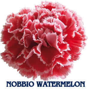 Nobbio Watermelon