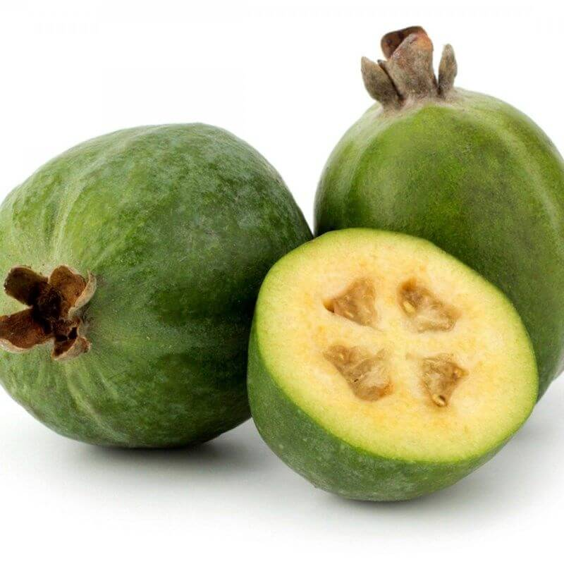 Feijoa sellowiana - Pineapple Guava
