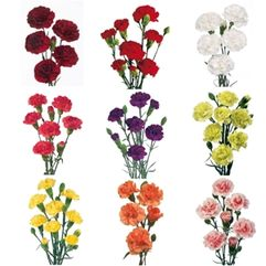 Highly Perfumed Miniature Carnations